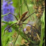 Jak profesjonalnie rozgnieść pajęczaka